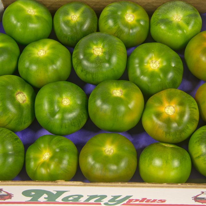 tomate-verde-tomato-almeria-nadeha-export-europe-011