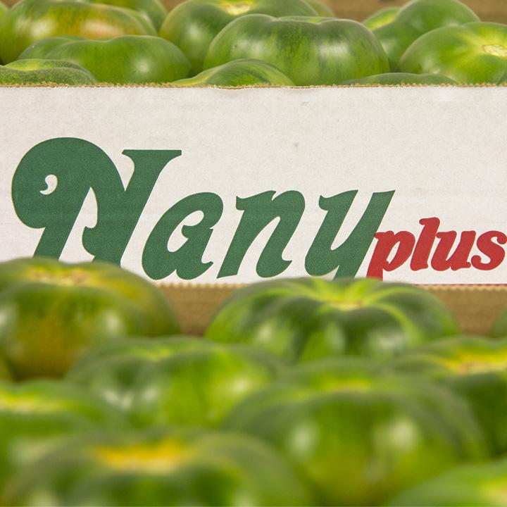 tomate-verde-tomato-almeria-nadeha-export-europe-021