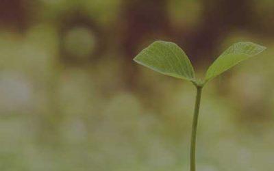 Una base sólida para crecer