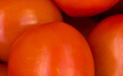 Tomate Pera